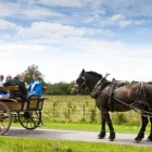 Jaunting Cars in Killarney